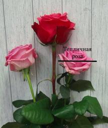 Розы с небольшим бутоном