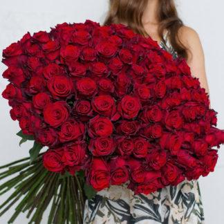 Букет бордовых роз Блэк Мэджик 101 шт