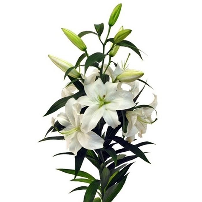 Букет из ветки лилии, компании цветов