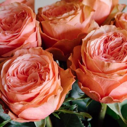 Букет из персиковых пионовидных роз Воронеж 2