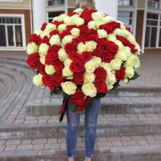 Букет из красных белых роз 101 шт Воронеж