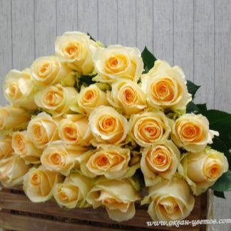 Букет кремовых роз Пич Аваланж Эквадор Воронеж