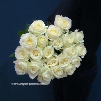 Букет белых роз Доломити 25 шт Воронеж