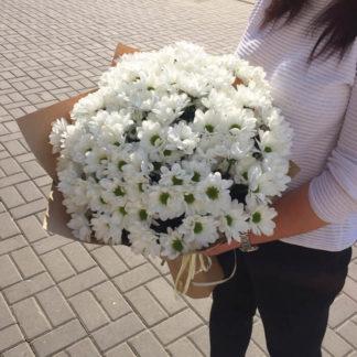 Букет из белых ромашек хризантемы 25 шт Воронеж