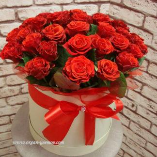 Алые розы в коробке Эль Торро 21 шт Воронеж